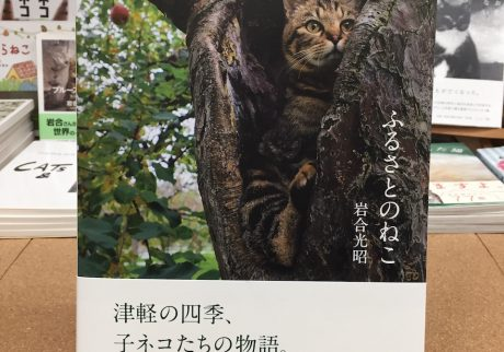 『ふるさとのねこ』岩合光昭(クレヴィス)