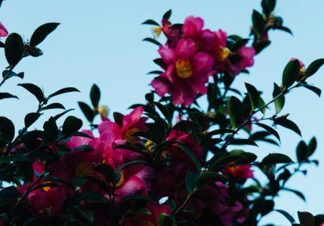 今月の写真家:佐々木知子