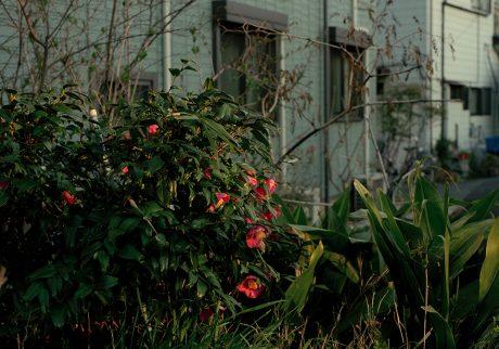 今月の写真家:山本正大