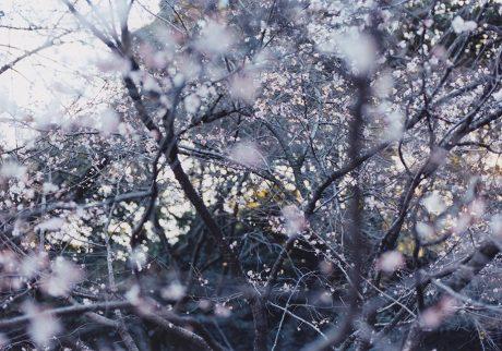 今月の写真家:田上浩一