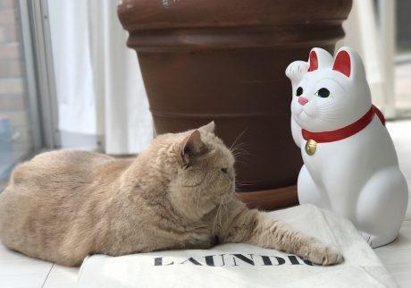 まねき猫?鮎子 and チャイ坊