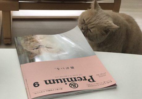 表紙デビュー!鮎子 and チャイ坊