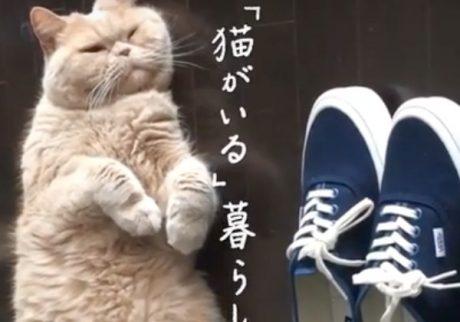 特集「猫がいる」7月20日発売中!