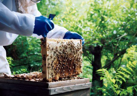 山梨・北杜より南アルプスの自然が詰まったハチミツ。