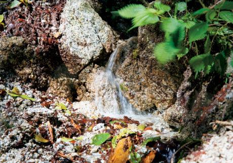 山梨・北杜より豊かな森から水が生まれ、人が集まる。
