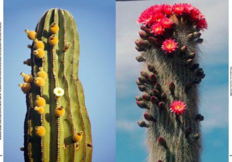 80年間に渡り乾燥地帯の植物を撮影した写真集「Xerophile」が発売。