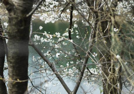 今月の写真家:竹之内祐幸