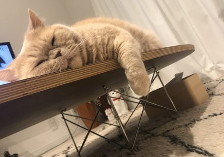 美容もバッチリ鮎子 and チャイ坊