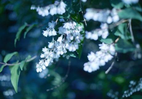 今月の写真家:伊場剛太郎