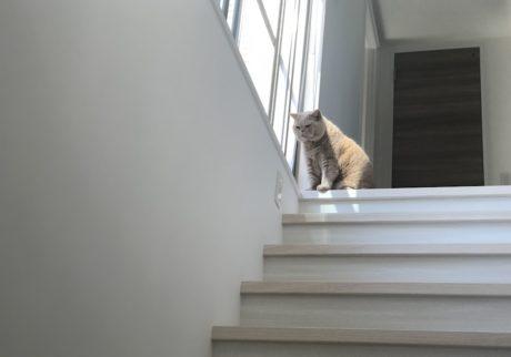 おっとり猫、チャイ坊の毎日。「太陽のにおい」