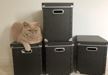 おっとり猫、チャイ坊の毎日。「表彰台に乗る練習」