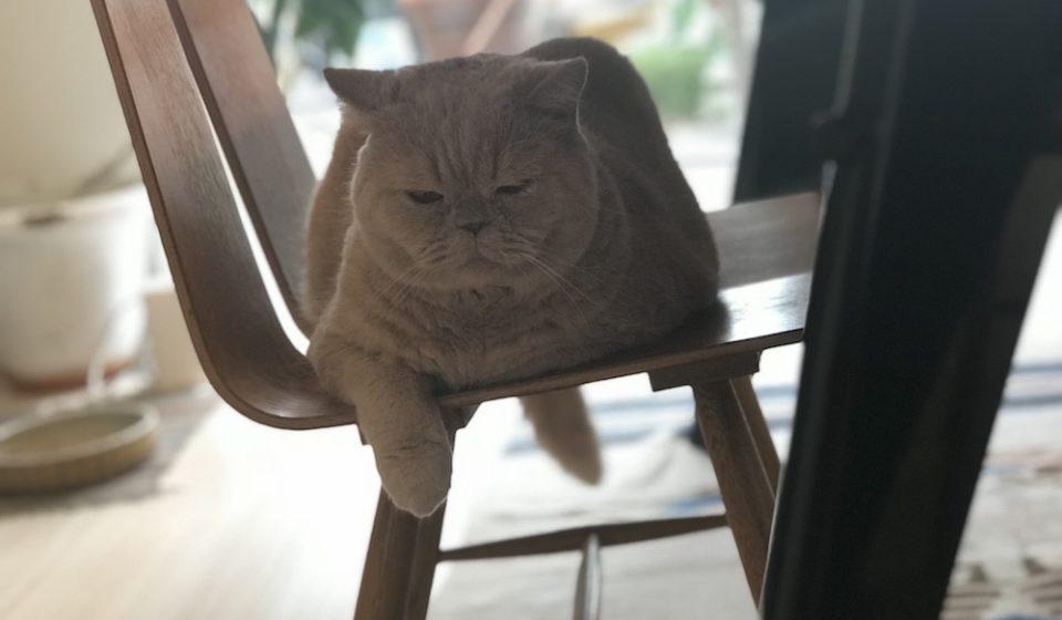 おっとり猫、チャイ坊の毎日。「ごはんの準備」