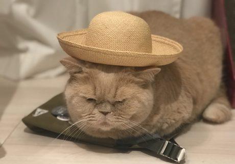 おっとり猫、チャイ坊の毎日。「かっこいい僕」