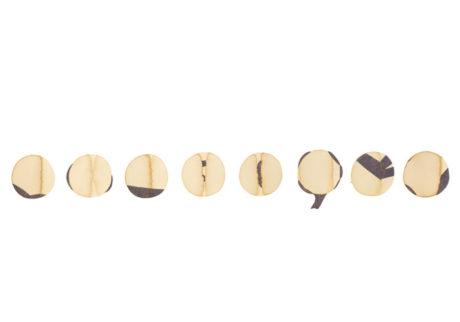 今日1日を、このイラストと。小澤真弓 vol.14