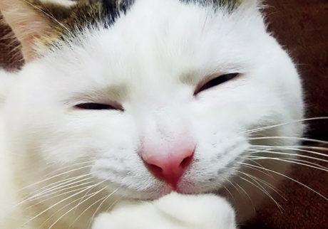 〈ドコノコ〉と一緒に猫の習性を学びました。