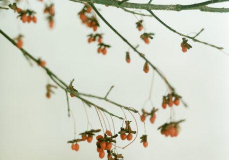 今月の写真家、今日の一枚。栗田萌瑛 vol.25