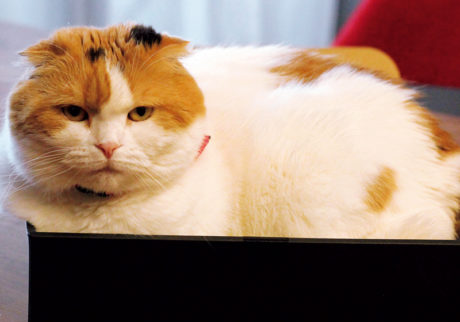 〈ドコノコ〉と一緒に猫の習性を学びました。箱入り