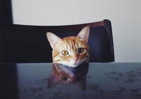 〈ドコノコ〉と一緒に猫の習性を学びました。あごクイ