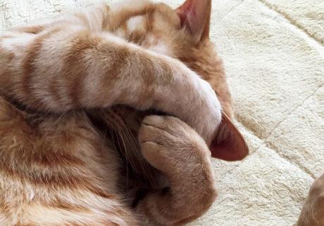 〈ドコノコ〉と一緒に猫の習性を学びました。まぶしい寝
