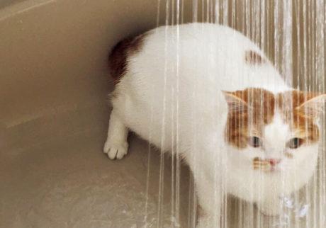 〈ドコノコ〉と一緒に猫の習性を学びました。水修行