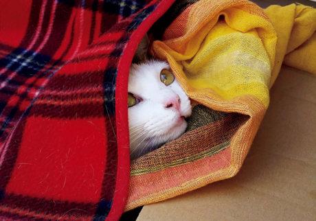 〈ドコノコ〉と一緒に猫の習性を学びました。暖どり名人
