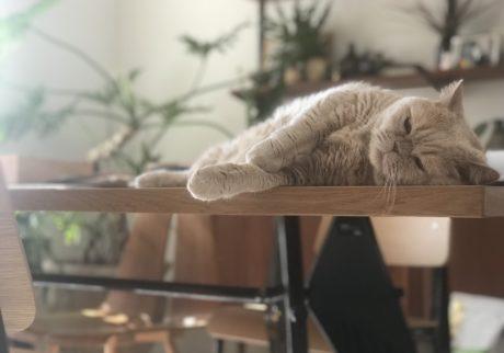 おっとり猫、チャイ坊の毎日。「晴れた日のゴロゴロ」