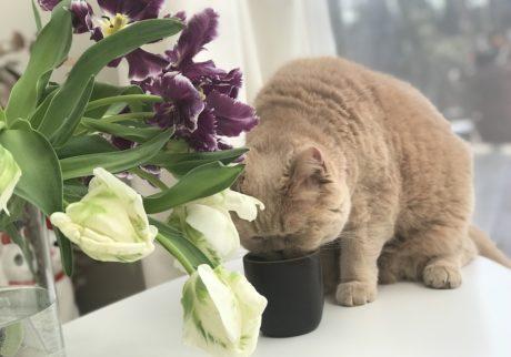 おっとり猫、チャイ坊の毎日。「マグカップがマイブーム」