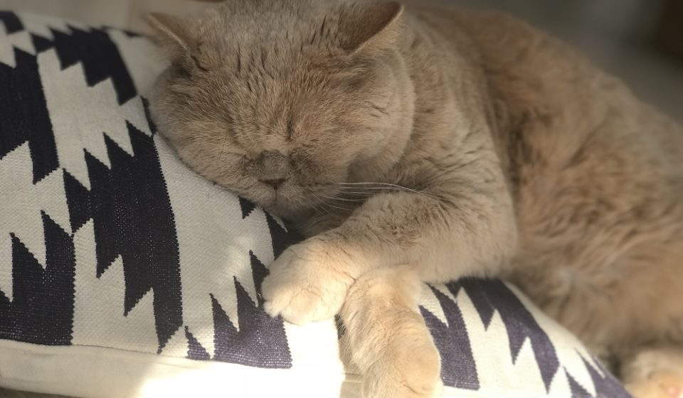 おっとり猫、チャイ坊の毎日。「僕のいびき」
