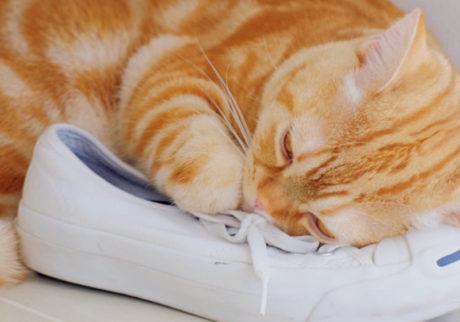 〈ドコノコ〉と一緒に猫の習性を学びました。ジャマかわ