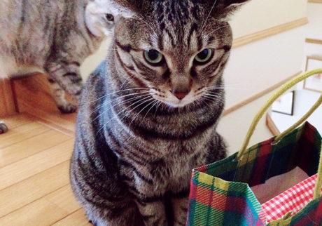 〈ドコノコ〉と一緒に猫の習性を学びました。飛行機耳