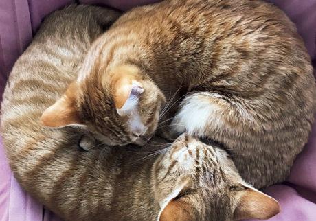〈ドコノコ〉と一緒に猫の習性を学びました。ニャンモナイト