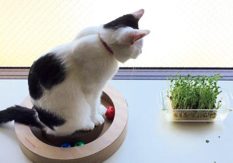 〈ドコノコ〉と一緒に猫の習性を学びました。猫転送装置