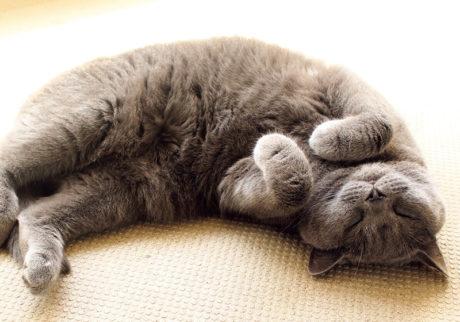 〈ドコノコ〉と一緒に猫の習性を学びました。猫めしや