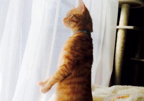 〈ドコノコ〉と一緒に猫の習性を学びました。起立
