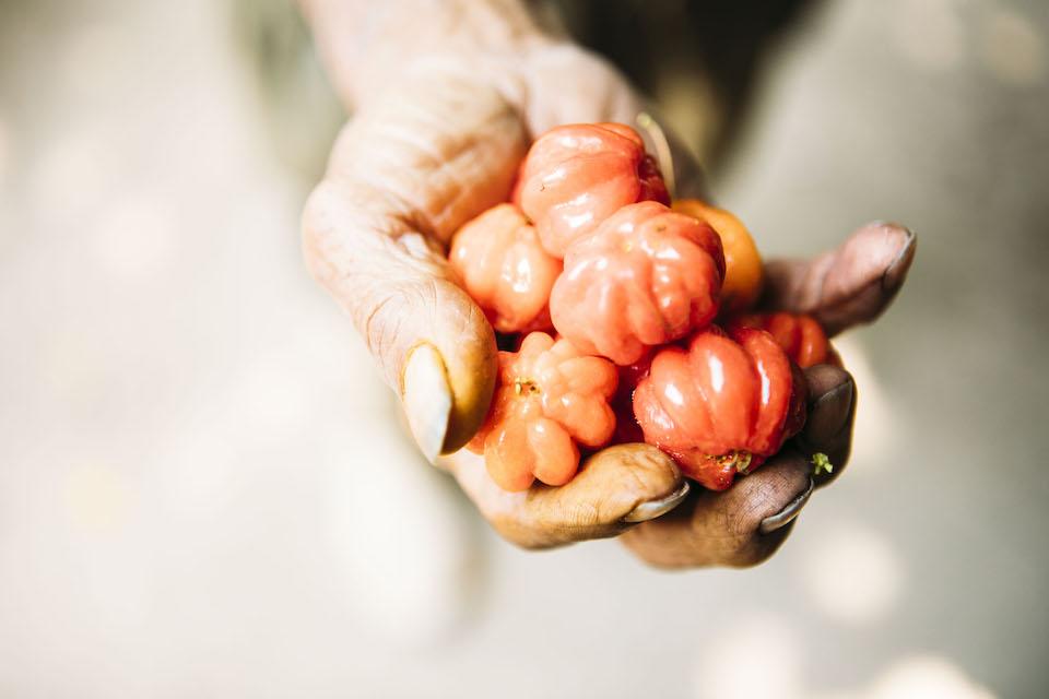 金星さんが食べさせてくれたピタンガ。南米の熱帯地方原産の果物で、赤く熟したものは甘みがある。
