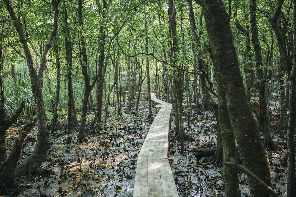 「西表島バナナハウス」の森本孝房さんに先導され、海岸へと続くボードウォークを歩く。時折、海から数十メートル離れた内陸部まで漂着しているゴミに驚かされる。