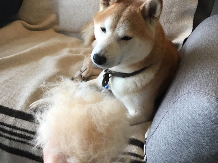 moku_hair02