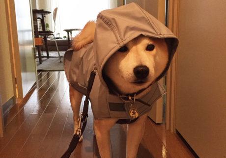 MY SWEETIE 27雨の日の装い。