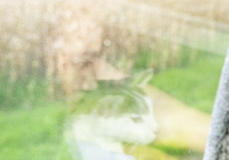 今月の写真家、今日の一枚。清水はるみ vol.25