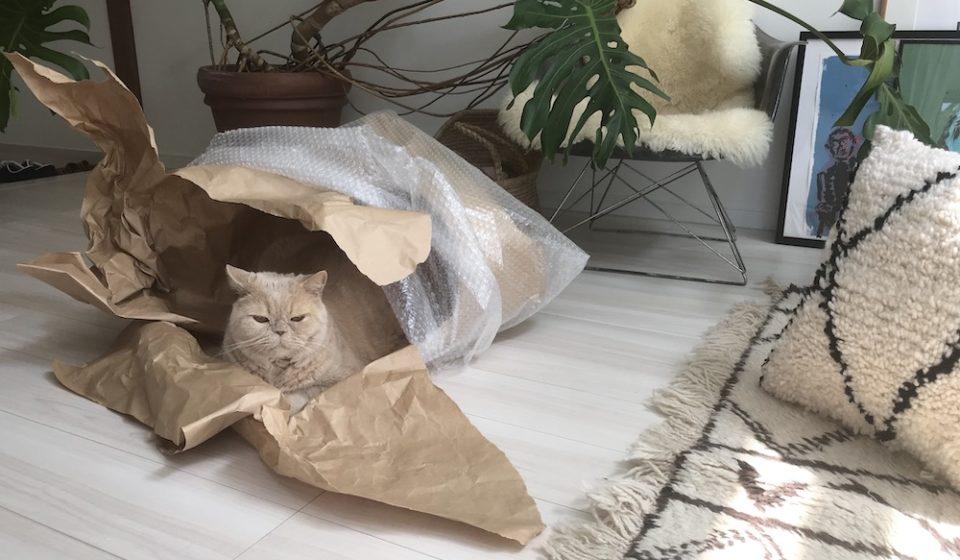 おっとり猫、チャイ坊の毎日。「新しいおうち?」