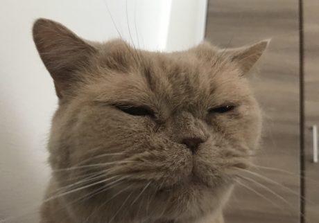 """おっとり猫、チャイ坊の毎日。「毎朝の""""エアもぐもぐ""""」"""