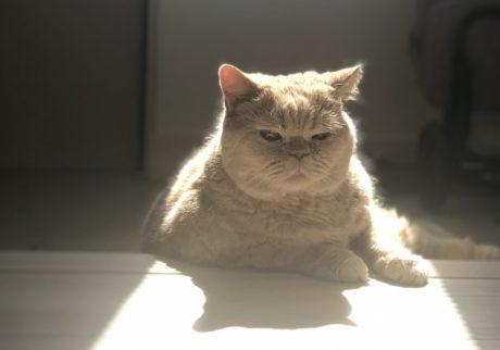おっとり猫、チャイ坊の毎日。「日向ぼっこで瞑想タイム」