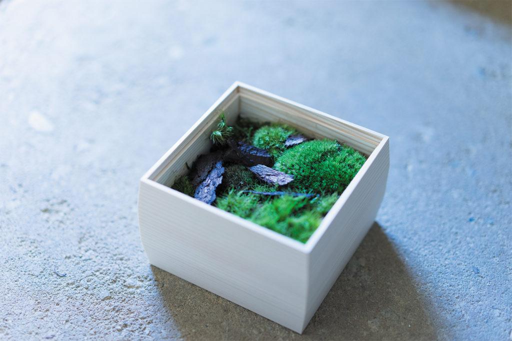 花屋みたて店主 西山隼人さんから学ぶ 京の苔木箱「かたかげ」づくり