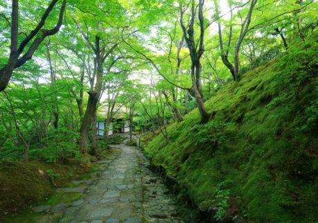 そうだ 京都、行こう。苔と新緑の京都で新たな発見を。