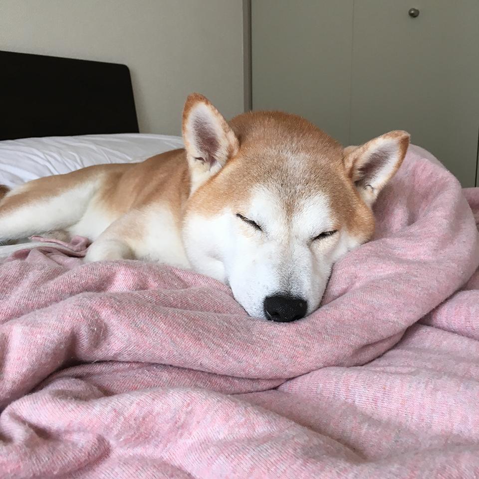 寝ている姿 モク