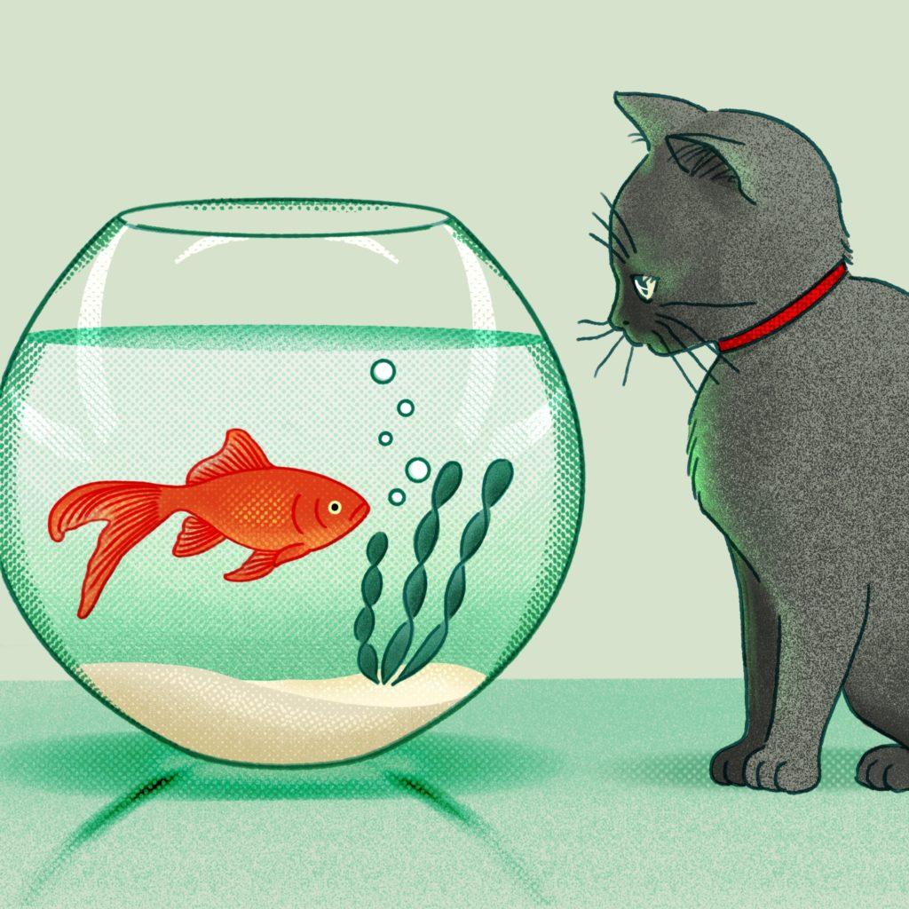 23-Goldfish_