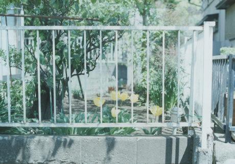 今月の写真家、今日の一枚。小室野乃華 vol.2