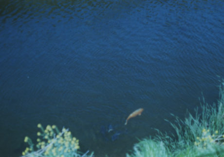 今月の写真家、今日の一枚。小室野乃華 vol.16