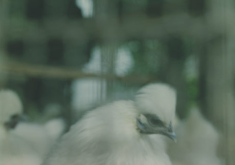 今月の写真家、今日の一枚。小室野乃華 vol.20