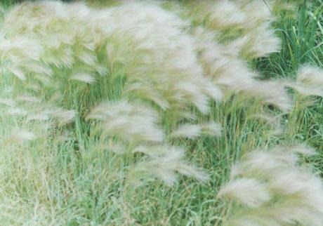 根室 より 風の草
